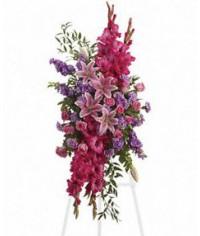 Gladiolová krása
