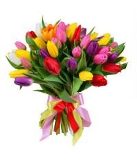 Penelope mix tulipánov  VEĽKOSŤ L